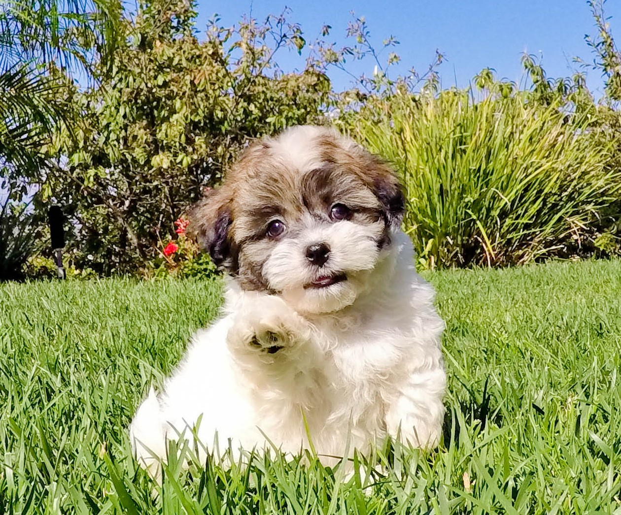 Craigslist Orange County >> Puppies For Sale In Southern California