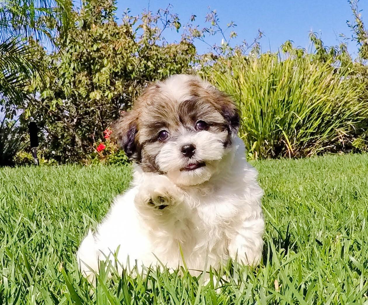 Craigslist Long Beach Pets For Sale